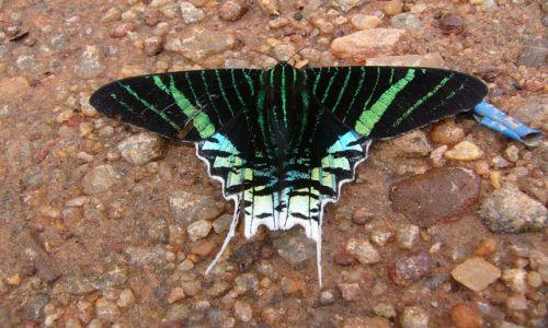 Zdjecie BOLIWIA / San Vicente / Skraj drogi / Motyl