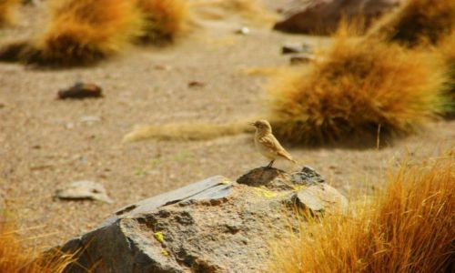 Zdjęcie BOLIWIA / Cafiupa / Cafiupa / Ptok