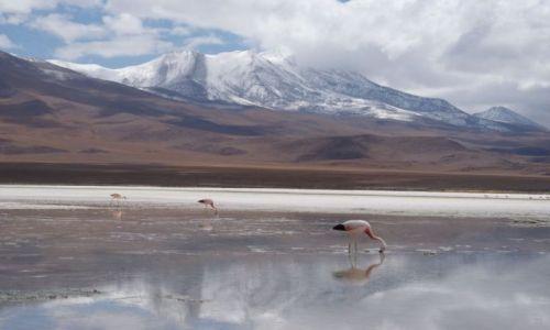 BOLIWIA / Park Eduardo Avaroa / Laguna Honda  / Flamingi nad Laguną
