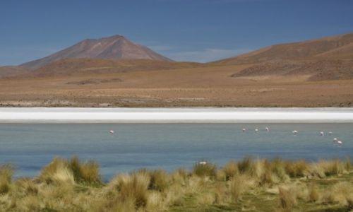 Zdjecie BOLIWIA / Potosi / Altiplano / Kolory Altiplano