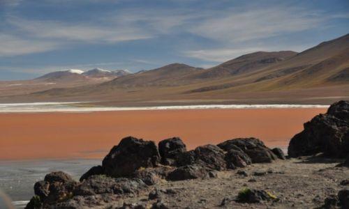 Zdjecie BOLIWIA / Aliplano / Laguna Colorado / Mars na Ziemi II