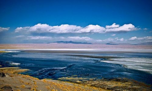 Zdjecie BOLIWIA / - / Altiplano, Laguna Colorada / kolory Boliwii