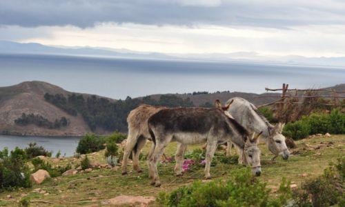 Zdjecie BOLIWIA / Isla del Sol /  Lake Titicaca / Boliwia