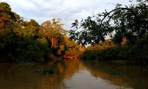 Zdjecie BOLIWIA / Boliwia / Dżungla / Dżungla