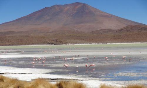 BOLIWIA / Uyuni / pustynia / Laguna Verde