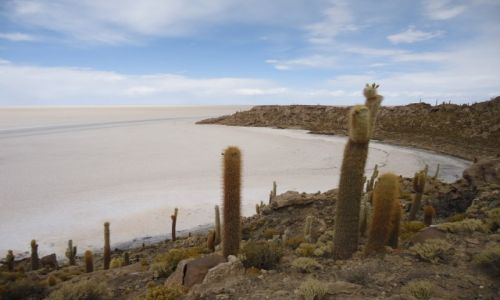 Zdjecie BOLIWIA / Potosi / Salar de Uyuni / Isla Incahuasi