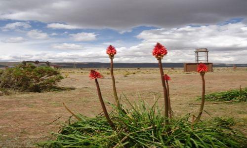 Zdjecie BOLIWIA / La Paz / Tiwanaku (Tiahuanako) / Kwiatki ...