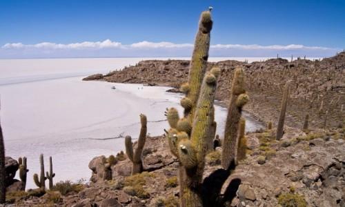 BOLIWIA / Altiplano / Salar de Uyuni / Incahuasi Island / Z kaktusami