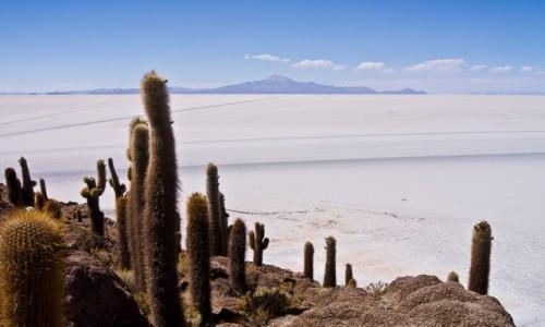 Zdjęcie BOLIWIA / Altiplano / Salar de Uyuni / Incahuasi Island / Sól i kaktusy