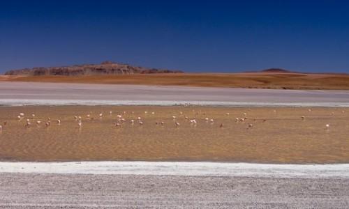 Zdjęcie BOLIWIA / Altiplano / laguna po drodze / Życie na lagunie
