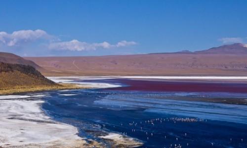 BOLIWIA / Altiplano / / / Laguna Colorada