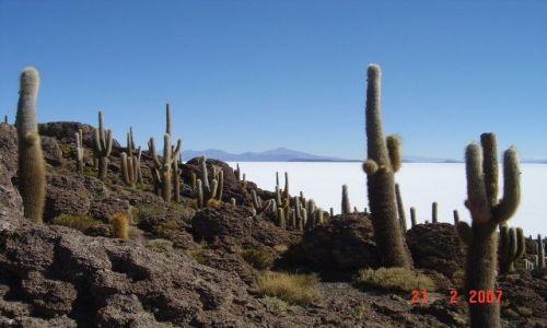 Zdjecie BOLIWIA / Salar de Uyuni / pustynia solna / pustynia solna
