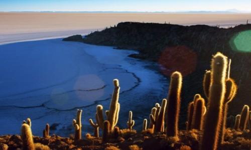 Zdjecie BOLIWIA / Potosi / Salar de Uyuni / Isla Incahuasi.