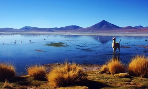 Zdjecie BOLIWIA / Potosi / Laguna Colorada / Laguna colorada.