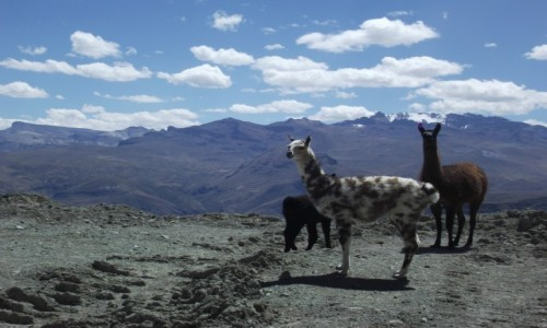 Zdjecie BOLIWIA / La Paz / okolice La Paz / My tu mieszkamy