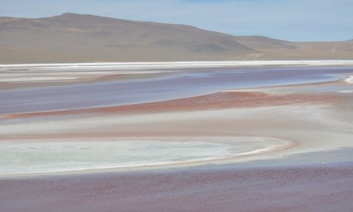 Zdjecie BOLIWIA / Uyuni / Laguna Colorada / Laguna Colorada