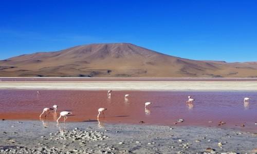 BOLIWIA / Altiplano-Potosi / Laguna Colorada / Laguna Colorada