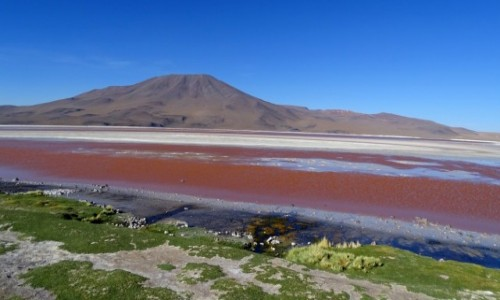 Zdjęcie BOLIWIA / Altiplano-Potosi / Laguna Colorada / Jak malowana