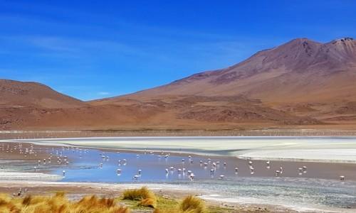 Zdjęcie BOLIWIA / Altiplano-Potosi / 4532 m npm / Laguna Hedionda