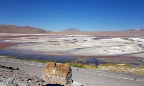 Zdjęcie BOLIWIA / Altiplano-Potosi / Laguna Colorada / Kolorowe esy floresy