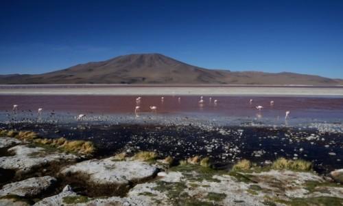 Zdjecie BOLIWIA / Altiplano-Potosi / Laguna Colorada / Widoczek z ptaszkami :)
