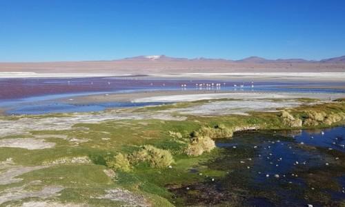 Zdjecie BOLIWIA / Altiplano-Potosi / Laguna Colorada / Kolorowa