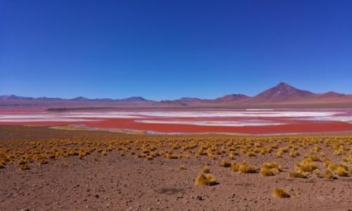 BOLIWIA / Altiplano / Laguna Colorada / Laguna Colorada