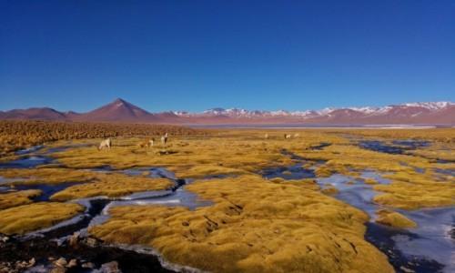 BOLIWIA / Altiplano / Okolice Laguny Colorada / Okolice Laguny Colorada