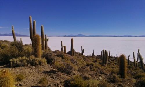 Zdjęcie BOLIWIA / Altiplano / Isla Incahuasi na Salar de Uyuni / Salar de Uyuni