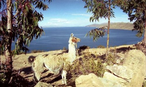 Zdjecie BOLIWIA / brak / Isla de Luna / ***