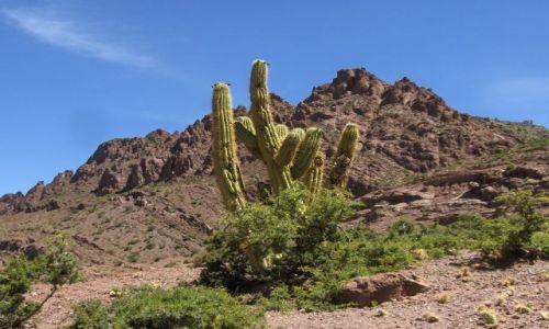 Zdjecie BOLIWIA / brak / Potosi / Kaktus