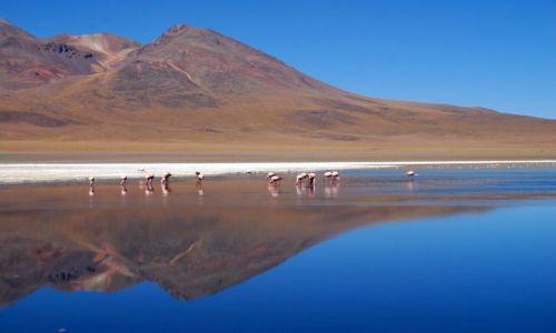 Zdjęcie BOLIWIA / Salar de Uyuni / Laguna - nie pamiętam nazwy / Laguna 2