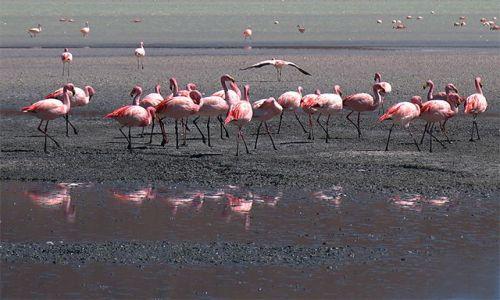Zdjęcie BOLIWIA / Salar de Uyuni / Laguna Colorada / Flamingi