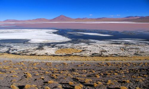 Zdjecie BOLIWIA / Salar de Uyuni / Laguna Colorada / Laguna Colorada