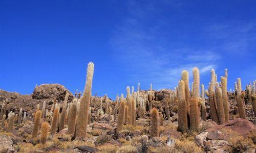 Zdjecie BOLIWIA / brak / Isla de Pescadores (Wyspa Rybaków) / kaktusowy las