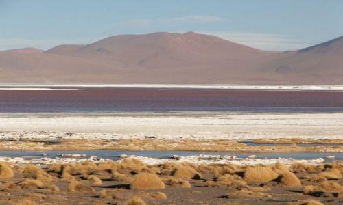 Zdjecie BOLIWIA / brak / Wyżyna Altiplano / Laguna Colorada