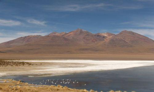 Zdjecie BOLIWIA / brak / Wyżyna Altiplano / Altiplano