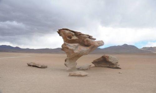 Zdjecie BOLIWIA / altiplano / salar de uyunii / kamienne drzewo