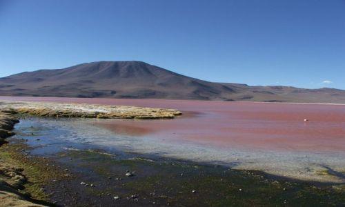 Zdjęcie BOLIWIA / - / Pustynia Atacama / Laguna Colorada