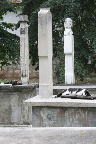 Zdjęcia: Sarajevo, Koty na muzułmańskich grobowcach, BOśNIA