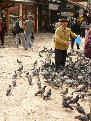 Zdjęcia: Sarajewo, starszy pan i jego gołąbeczki, BOśNIA i HERCEGOWINA