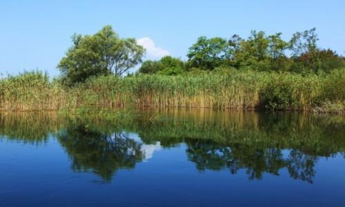 Zdjecie BO�NIA i HARCEGOWINA / Delta Neretwy  / Hutovo Blato, rezerwat przyrody / Trzciny