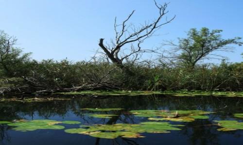 Zdjecie BO�NIA i HARCEGOWINA / Delta Neretwy  / Hutovo Blato, rezerwat przyrody / Natura