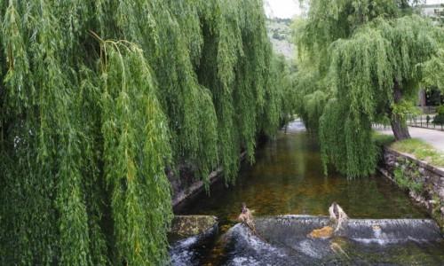 BOśNIA i HERCEGOWINA / - / rzeka Bistrica - Livno / wierzby...