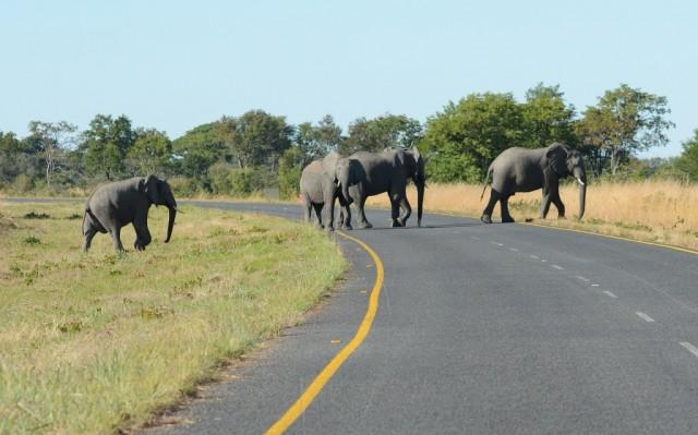 Zdjęcia: Park Chobe, Słonie w Parku Chobe, BOTSWANA