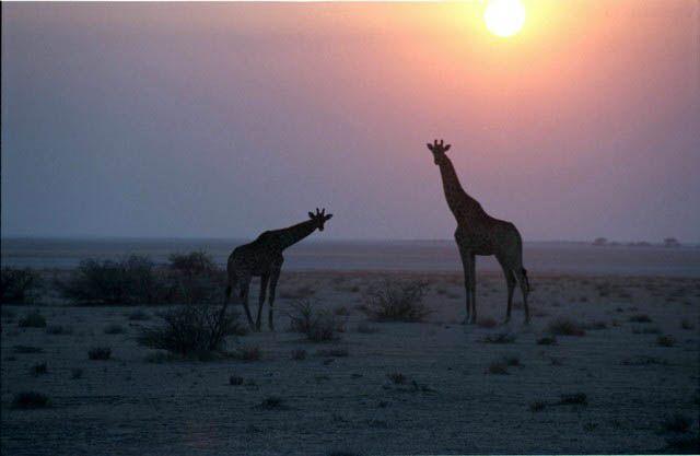 Zdjęcia: MILD OF THE ROAD, WSPOMNIENIE Z SAFARI, BOTSWANA