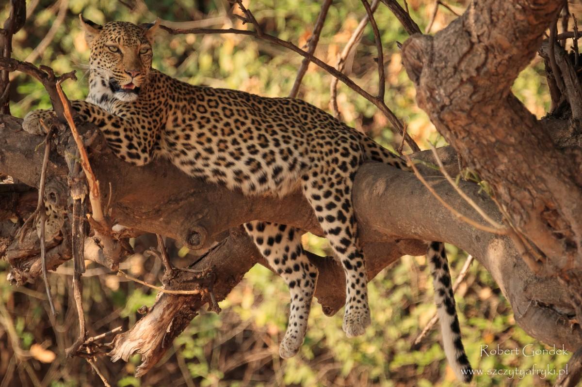 Zdjęcia: Chobe National Park, Chobe National Park, Odpoczynek, BOTSWANA
