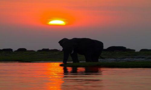 Zdjecie BOTSWANA / - / Chobe NP / Afrykański klasyk