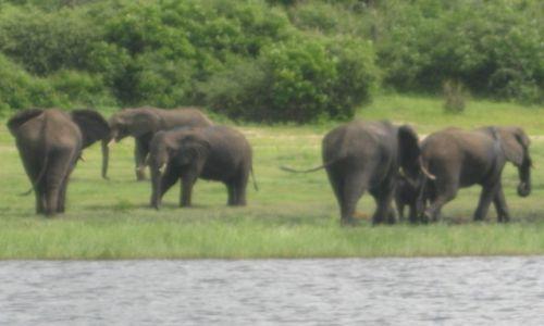 Zdjęcie BOTSWANA / Botswana / Botswana / Park Narodowy Chobe