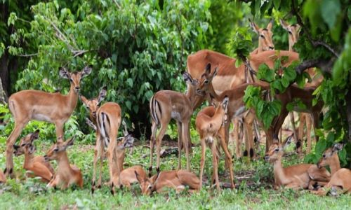 Zdjecie BOTSWANA / Chobe National Park / Chobe / Przedszkole